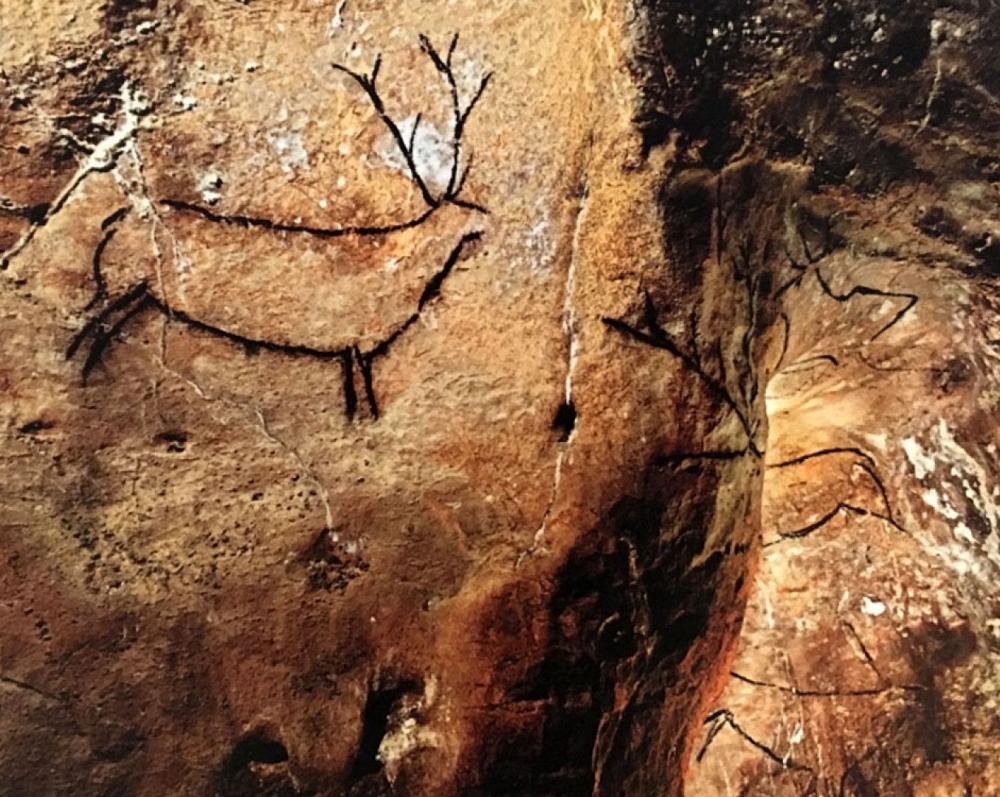 La Cueva y Museo de Altamira_26