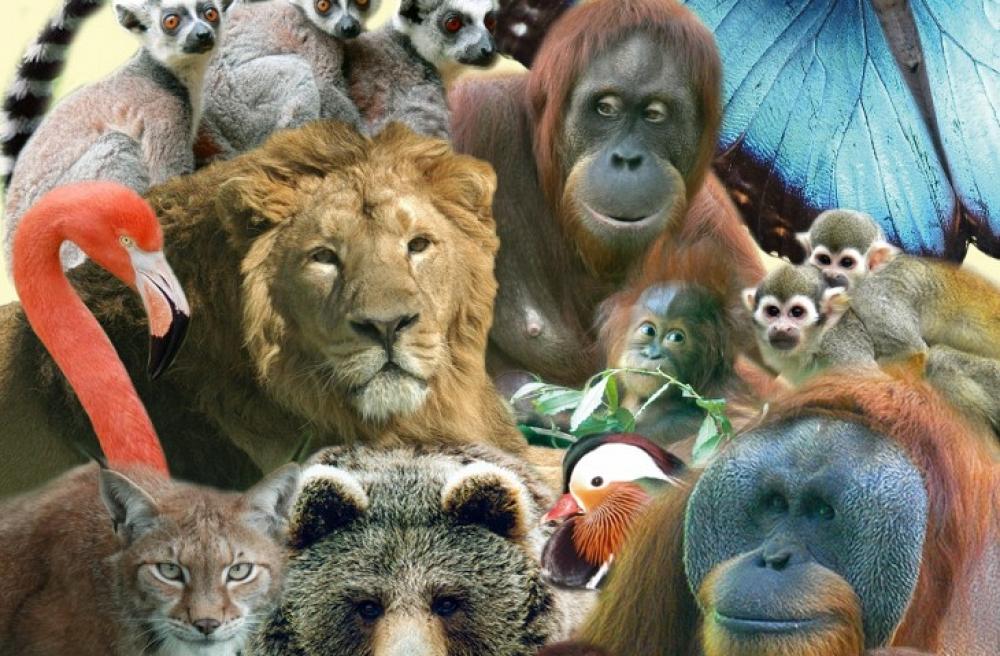 Zoo_20